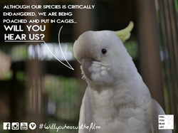 caged bird cuckatoo