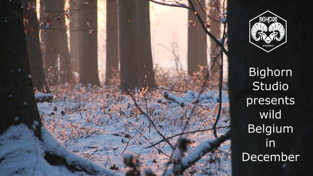 Discover wild Belgium in December