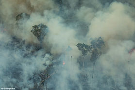 _amazon_fires_2019_greenpeace.jpg