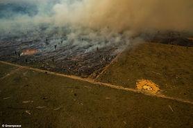 greenpeace_amazon_fires_.jpg