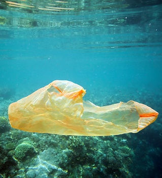 Plastic Pollution Coral Bleaching