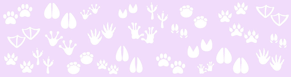 multipaw-newsletter-purple.jpg