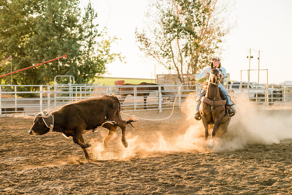 Aubree Skone roping a steer on her horse, Sparkle