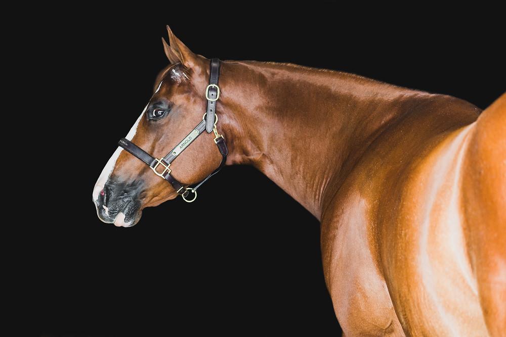 Arnold the Wonder Pony