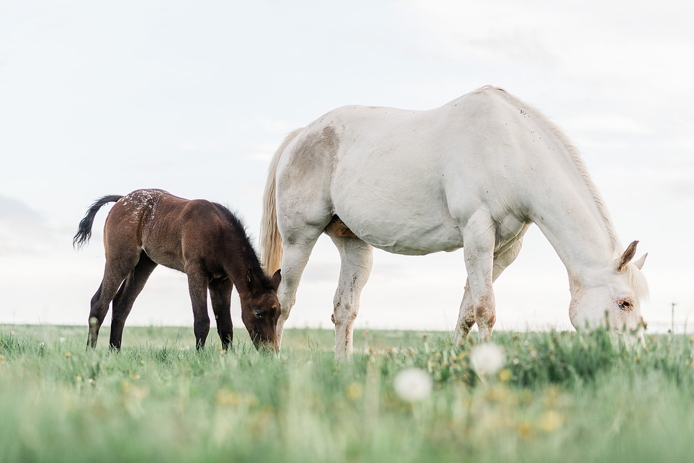 mare and foal grazing