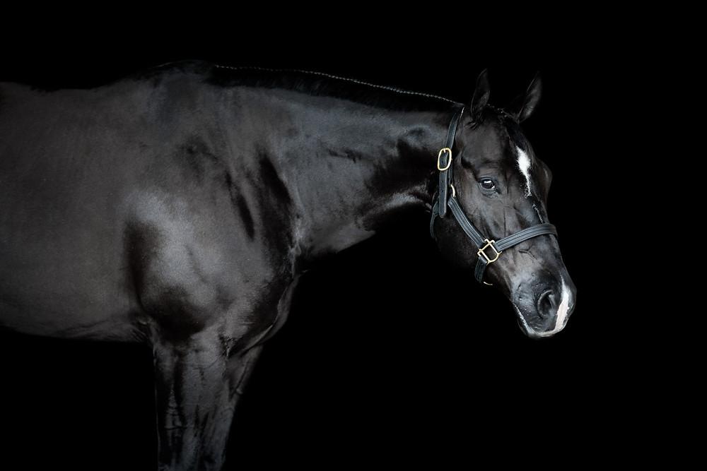 Fine Art Equine Portrait of Danny