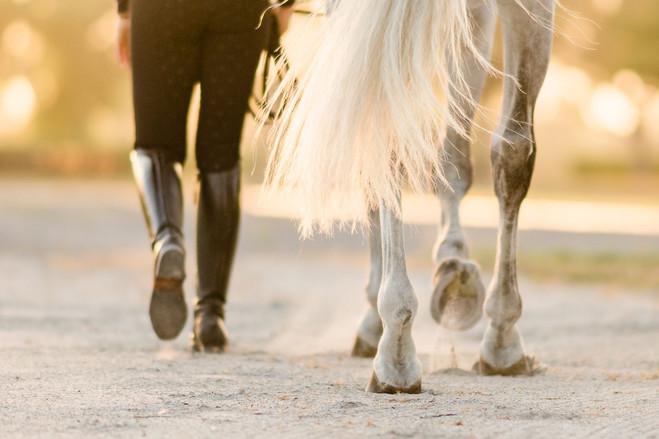 Jordan Lockwood | Helgstrand Dressage | Wellington, FL | Windsome Farms