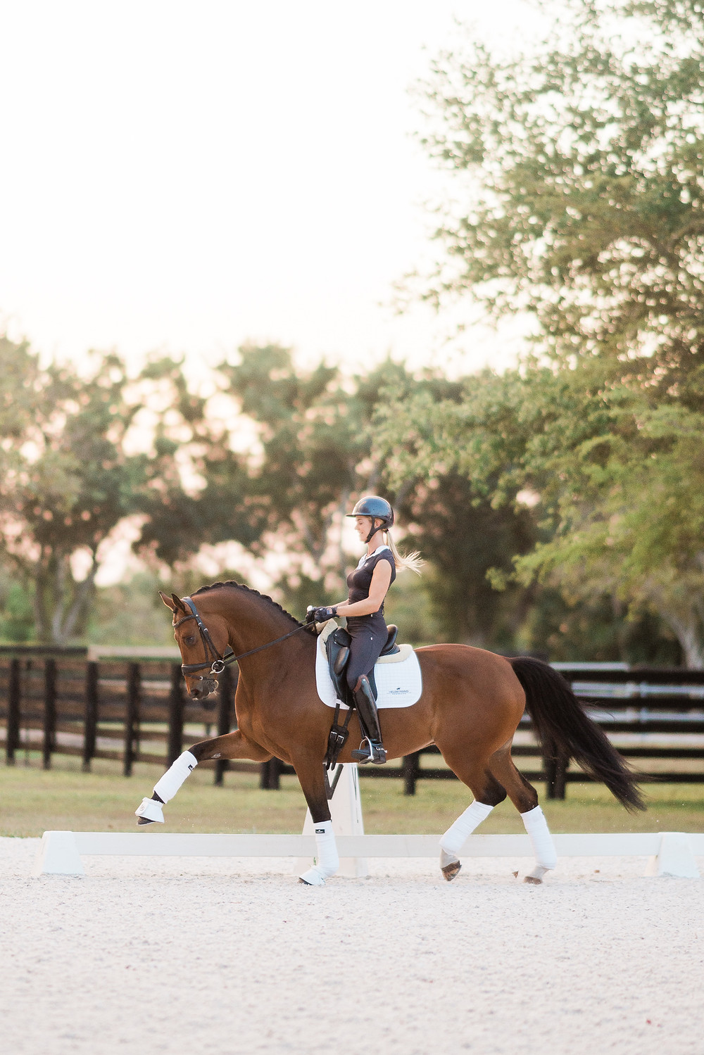Amanda trotting Backstage in the outdoor arena at sunset in Wellington, FL