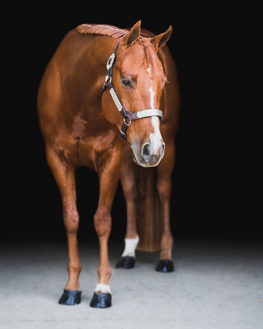 Black background horse photo