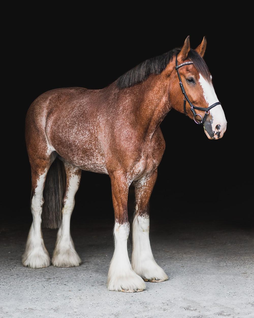 Fine Art Equine Portrait of Charlotte