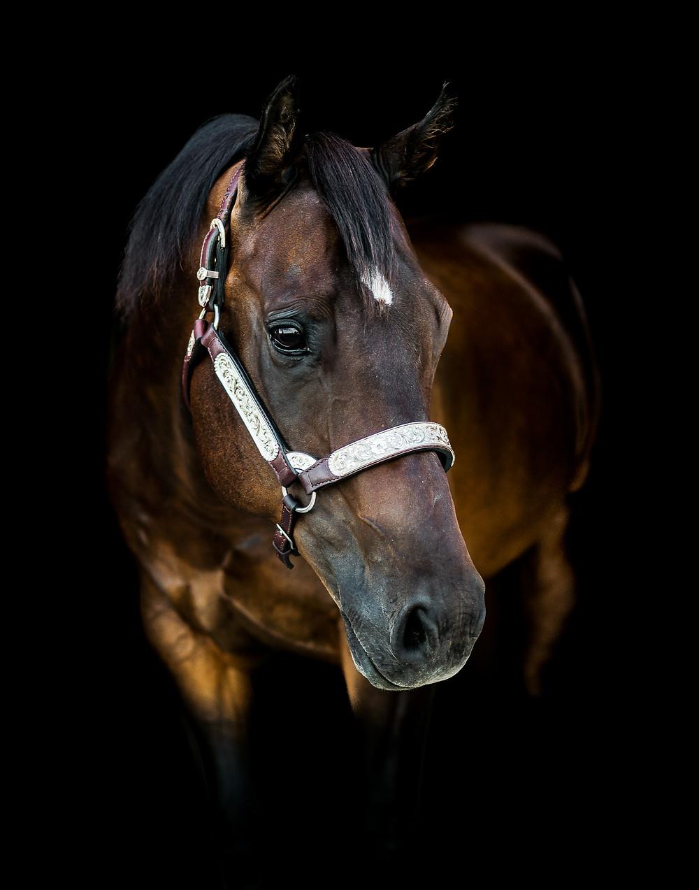 fine art equine portrait of Cameron