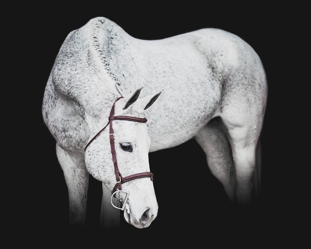 Hunter Under Saddle Champion