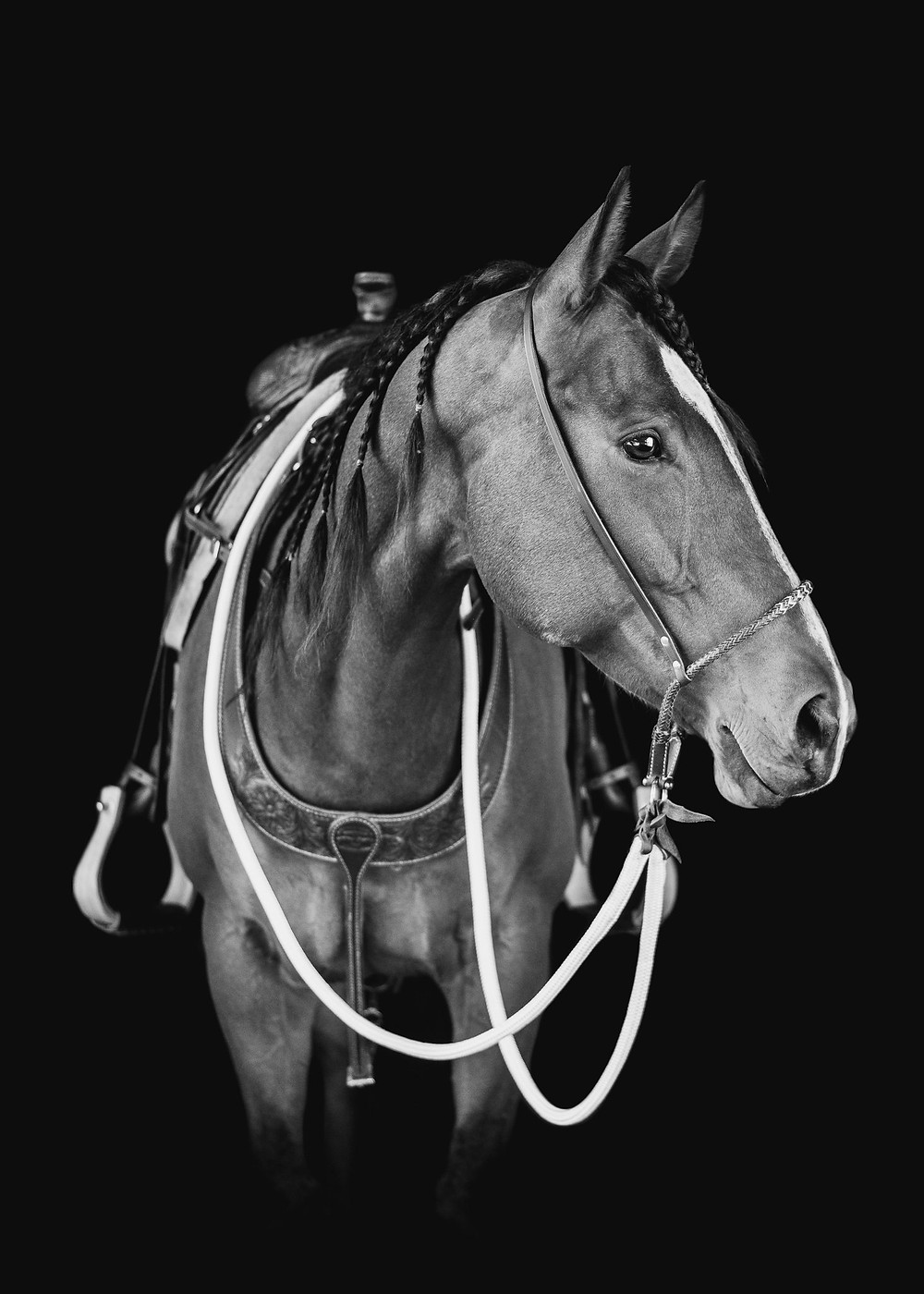 a black and white image of Rhodie, a quarter horse mare, on a black background