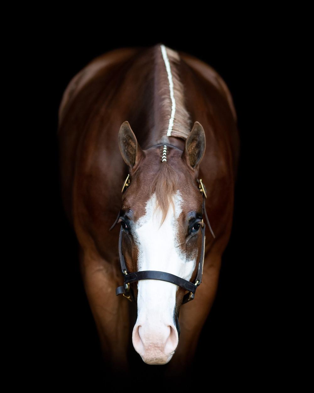 A black background portrait of Paint Horse, Jimmy John