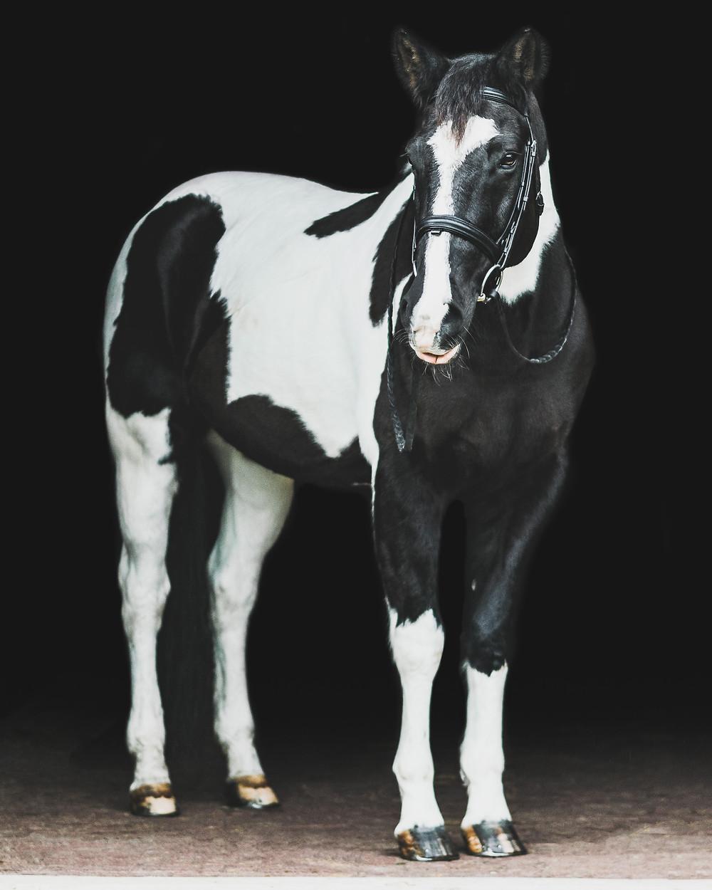 Tonto, fine art equine portrait