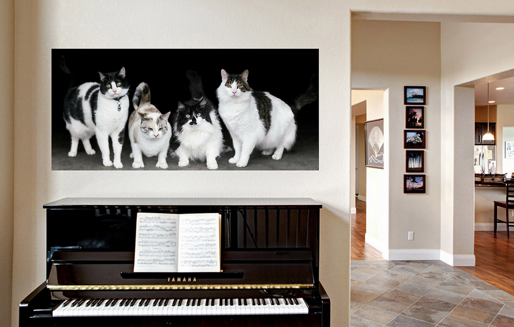 Heidy's kitties printed on Standout