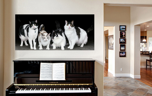 Heidy's kitties printed on Standout
