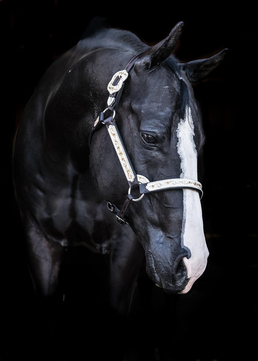 Fine art equine portrait of Hank