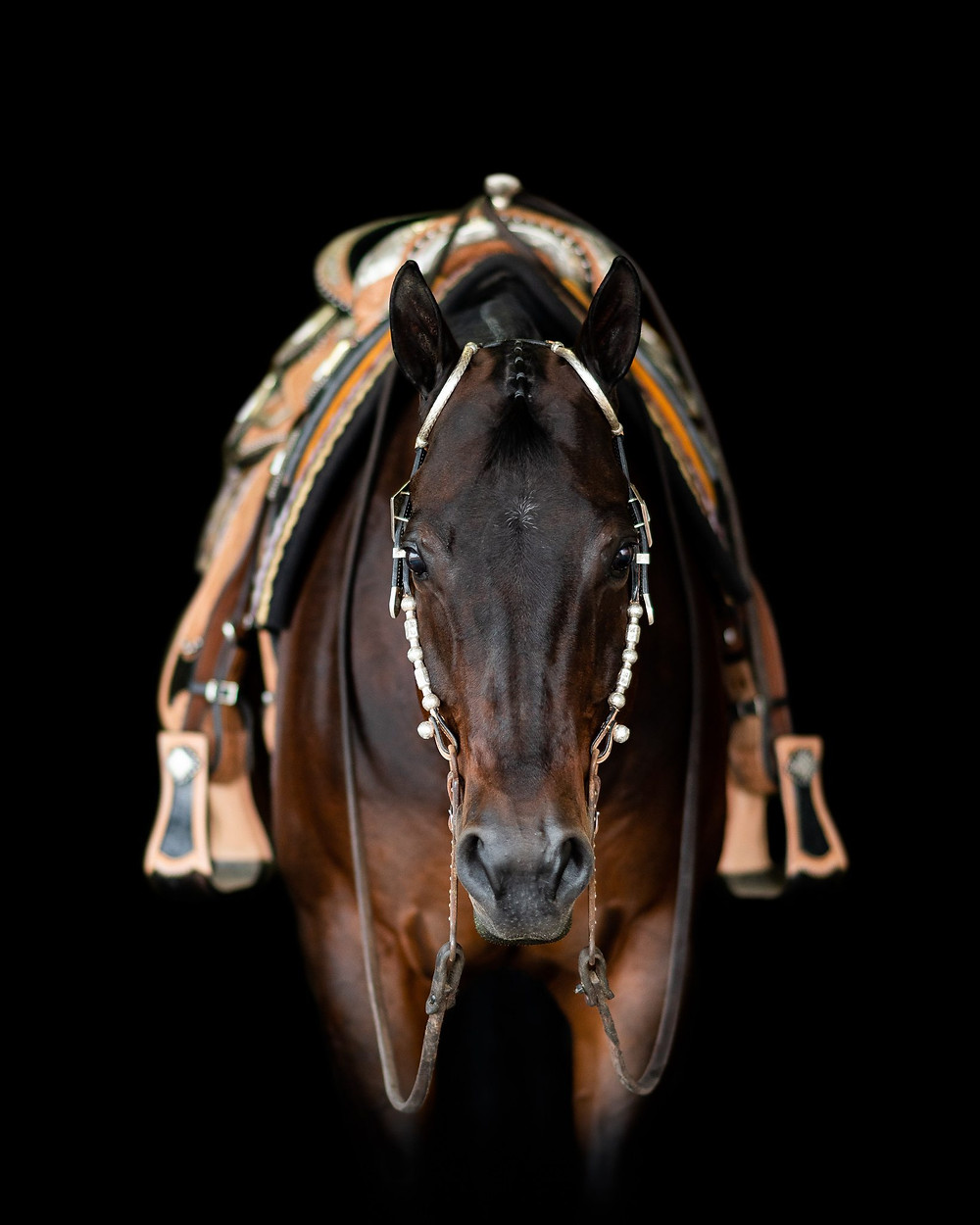 A black background portrait of Pink, with her saddle on