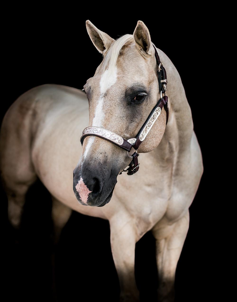 Fine art equine portrait of Lark