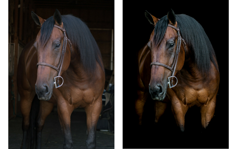 Stella Before and After