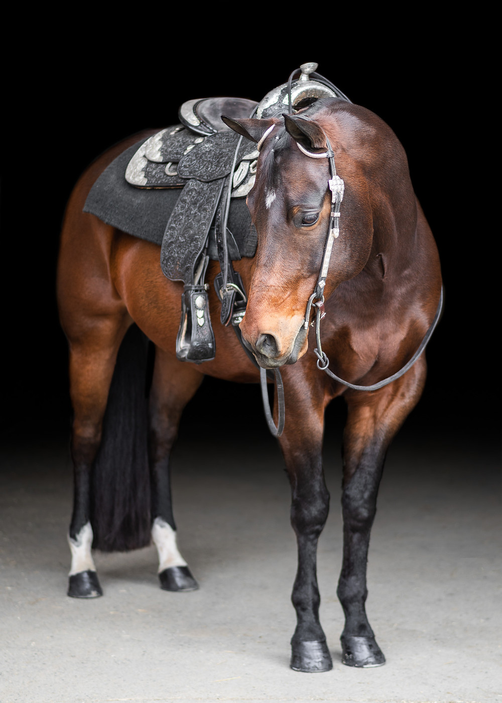 Fine Art Equine portrait of Timmy
