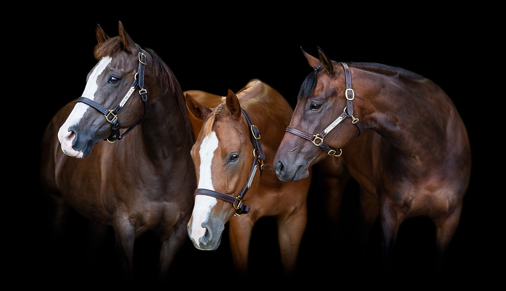 Black background of all three of Anna's horses