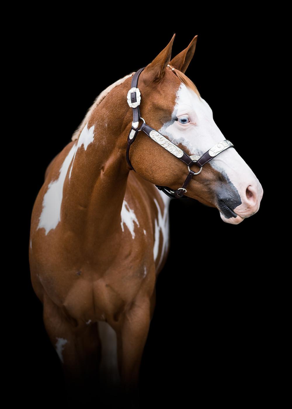 Fine Art Equine portrait