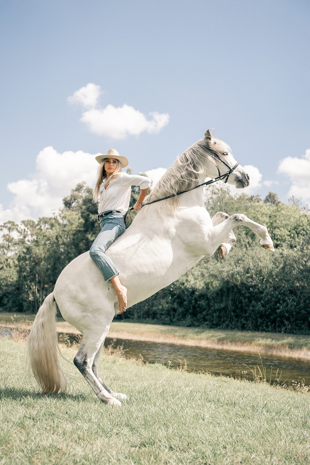 a blonde girl sitting backwards on her andalusian trick pony as he rears on his hind legs