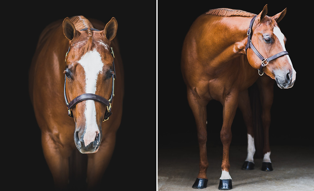 Fine art equine portraits of Arnold
