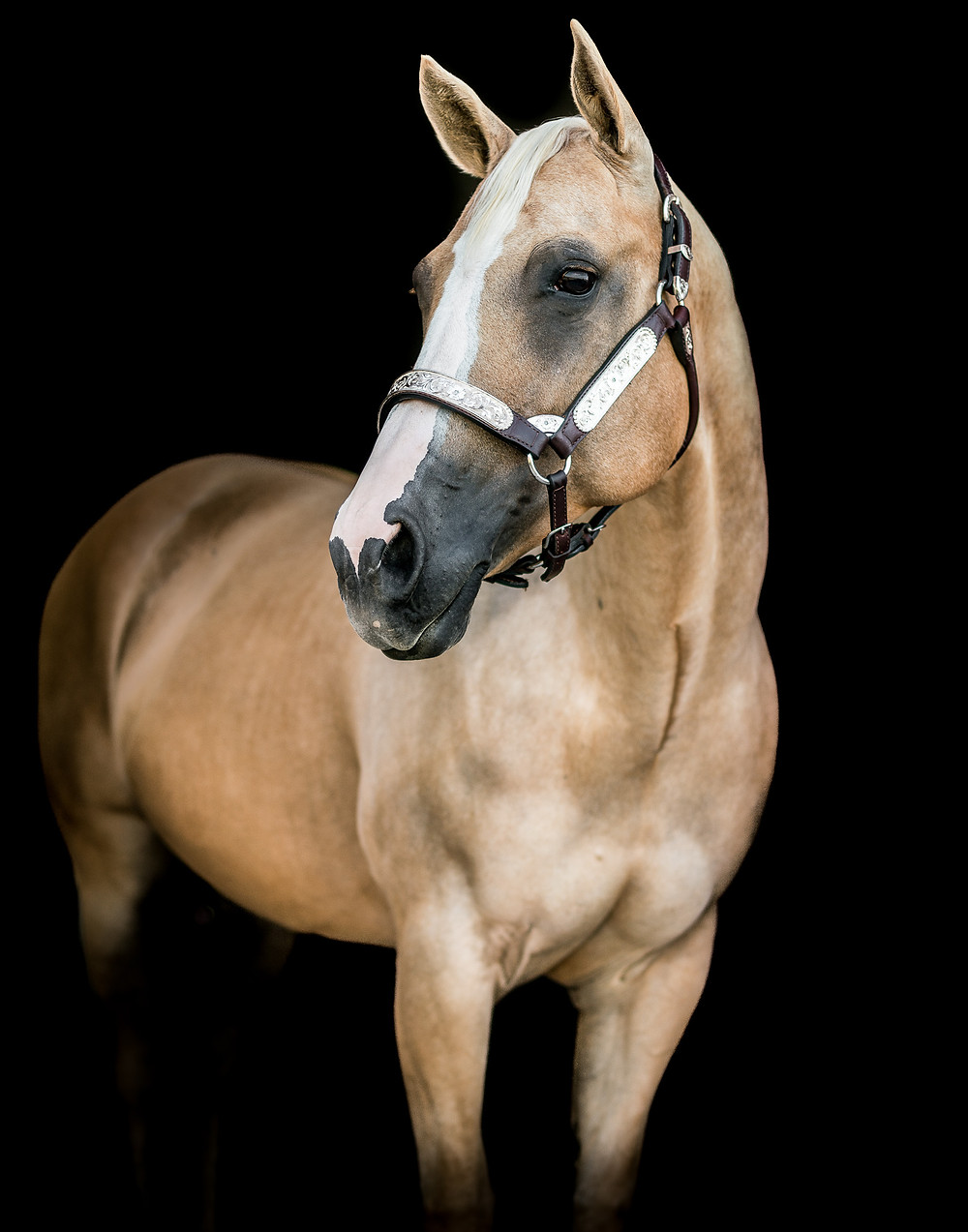 fine art equine portrait of Shelby