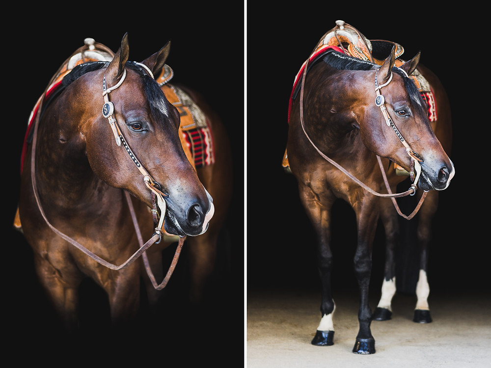 Fine art equine portraits | Chipper