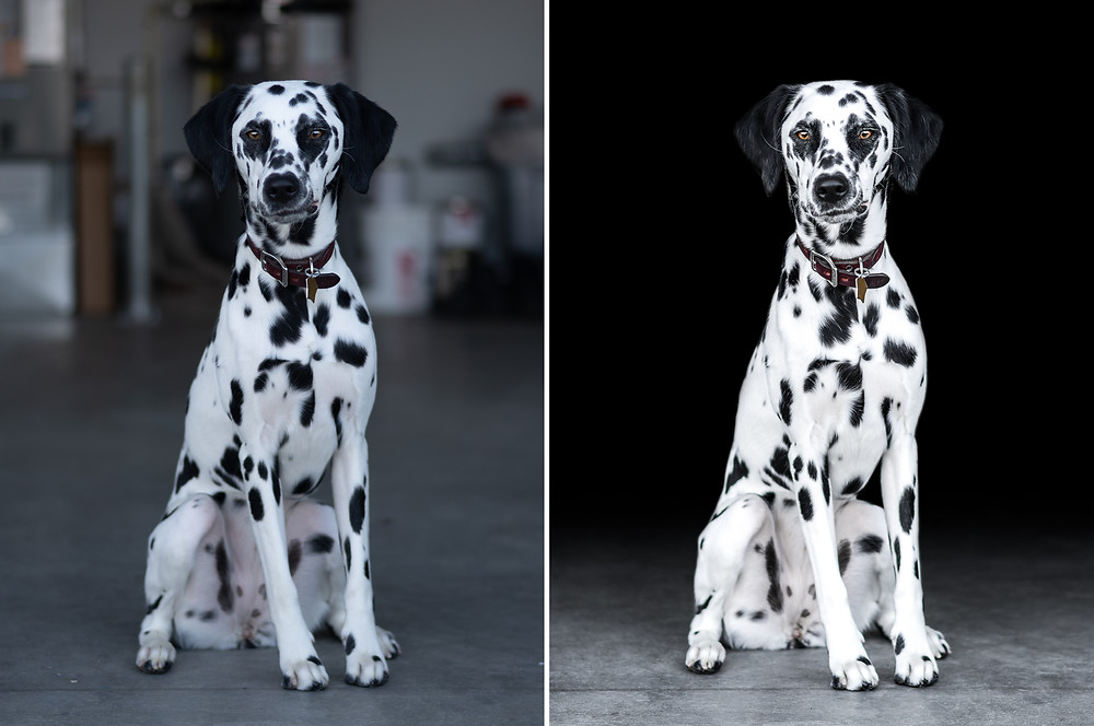 before and after edit of Penny, the dalmatian