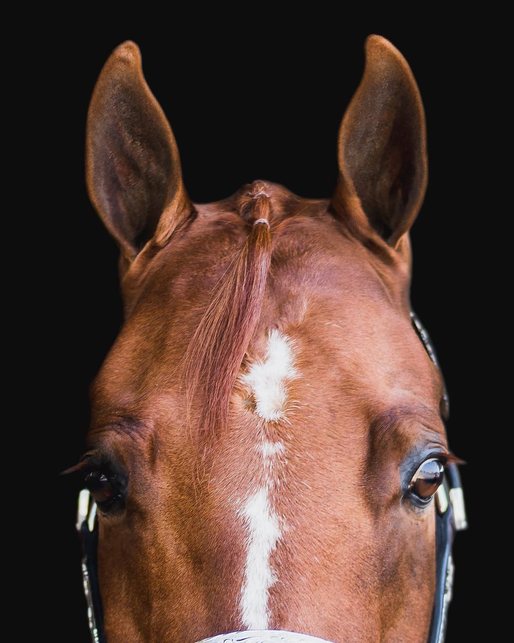 artistic horse photo