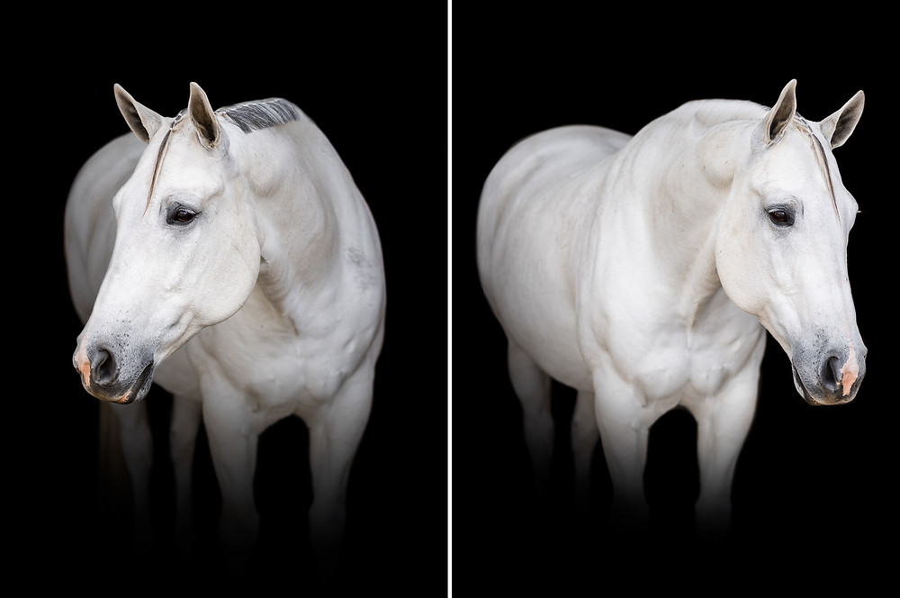 Fine Art Equine portraits of Crystal