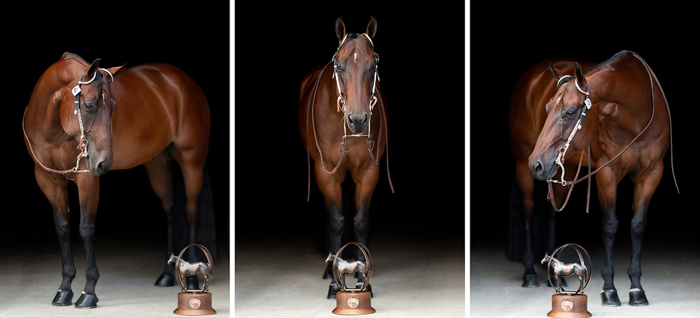 Three separate images of Wayne with his bronze AQHYA World Show trophy, that him and V won in trail