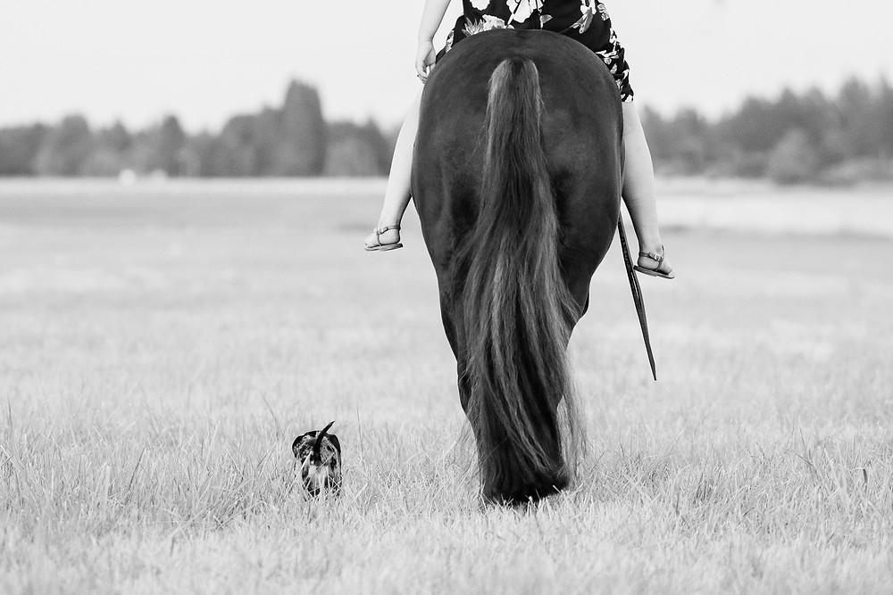 Chloe riding Marion bareback walking through the field with Lucy by their side