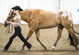 a girl running with her horse in showmanship at a show