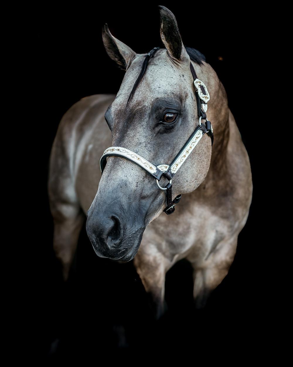 Fine art equine portrait of Me