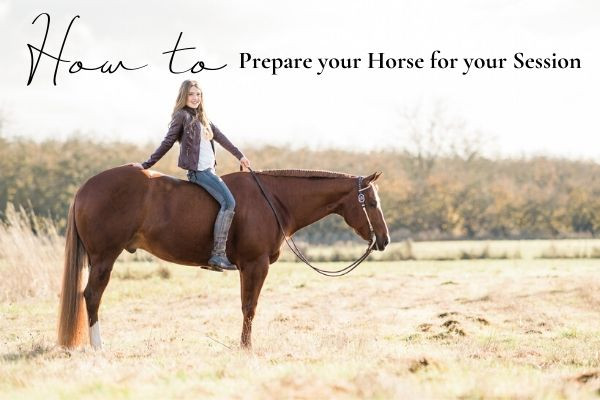 How to Prepare your Horse for your Session