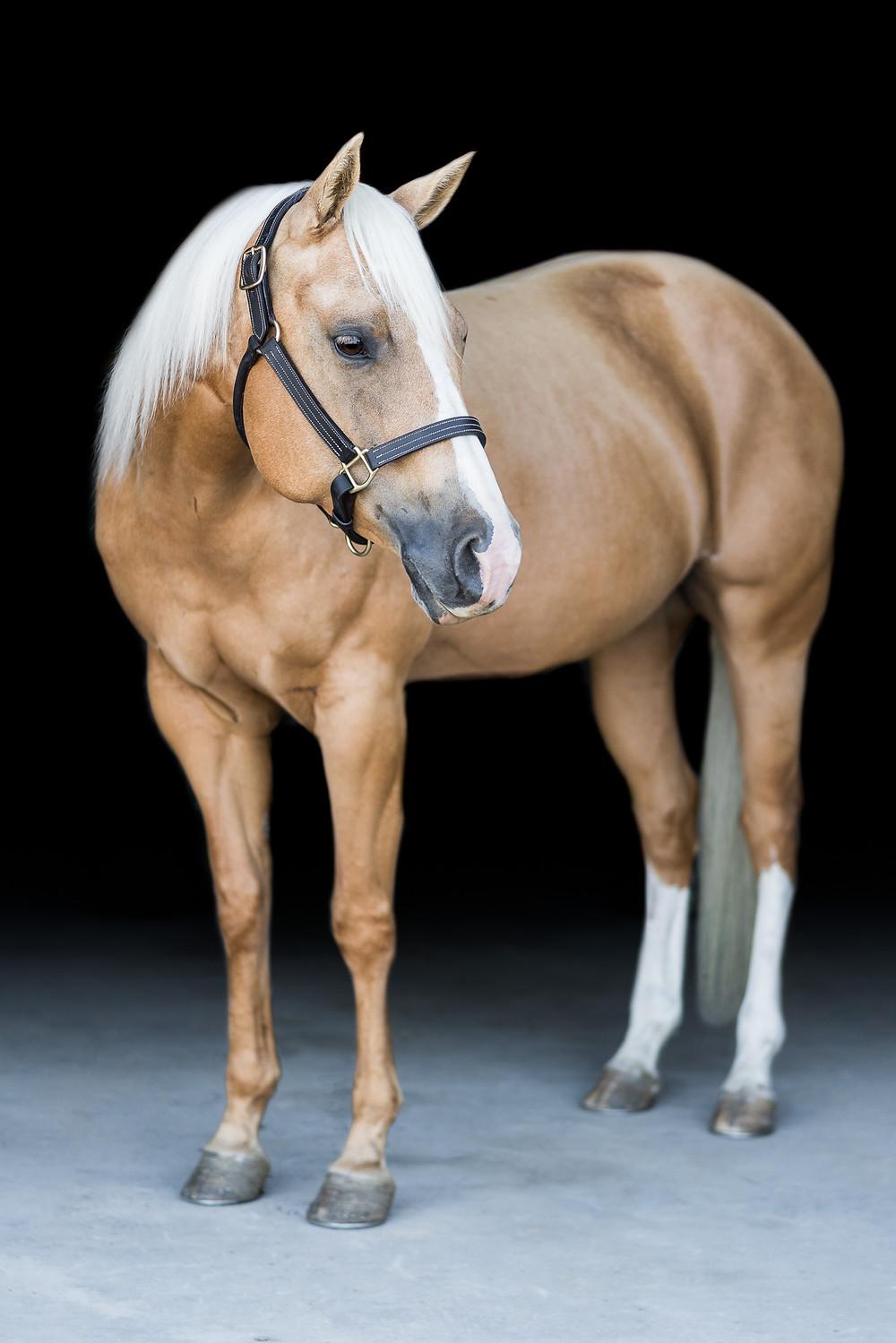 Fine Art Equine Portrait | Zyr