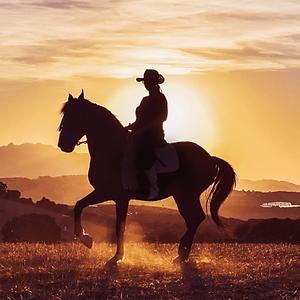 Pferde Shooting Caballo y Vino Andalucia