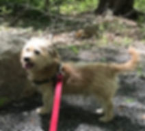 Frank on Hike (2).jpg