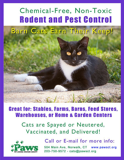 Adopt a barn cat for rodent patrol at Paws, Norwalk, CT