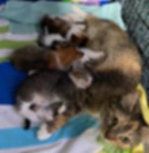 katniss_kittens.jpg