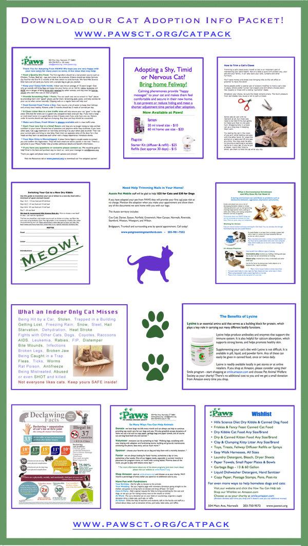 cat_adopt_packet.jpg