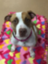 Penny on Blanket.jpg