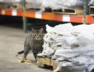 Adopt a Barn Cat at PAWS in Norwalk, CT, Chemical-free ...