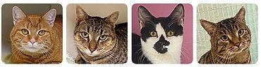 pp_sponsor_cat.jpg