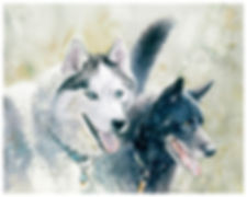 commissioned watercolor, dogs, Kathy Paivinen
